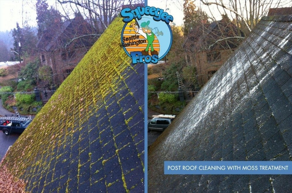 Moss Removal And Roof Clean In Seattle Squeegee Pros
